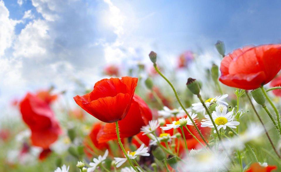 bộ tranh kính hoa cỏ