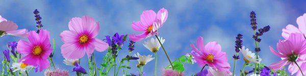 tranh bep hoa co